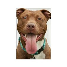 Pit Bull 14 Rectangle Magnet