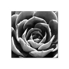 "Echeverias_IMG_6785_30_30_B Square Sticker 3"" x 3"""