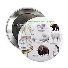 "Animals of the Polar Regions 2.25"" Button"