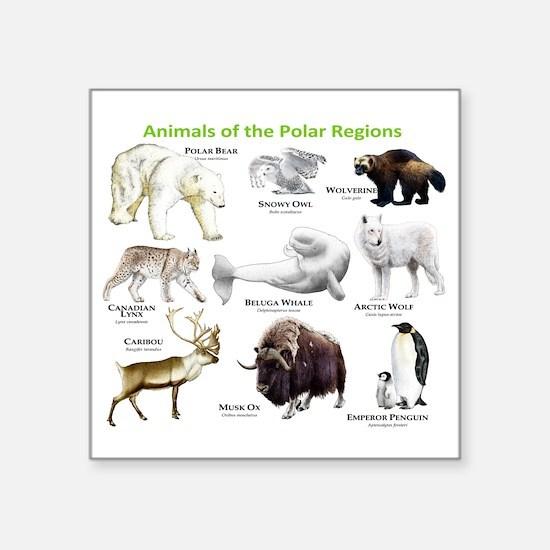 "Animals of the Polar Region Square Sticker 3"" x 3"""