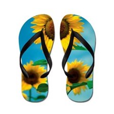 Close-up of Sunflowers, Kansas, USA Flip Flops