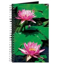 Close-up of two pink Water Lilies (Nymphae Journal