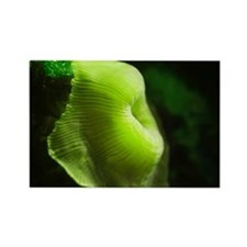 Green Anemone Rectangle Magnet