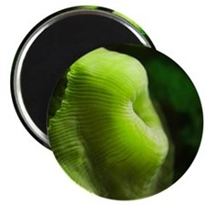 Green Anemone Magnet
