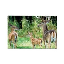 Buck With Doe  Fawn Puzzle Rectangle Magnet