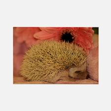 baby_hedgehog_1 Rectangle Magnet