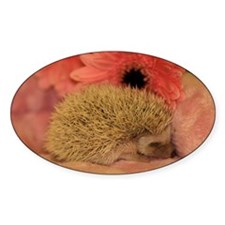 baby_hedgehog_1 Decal