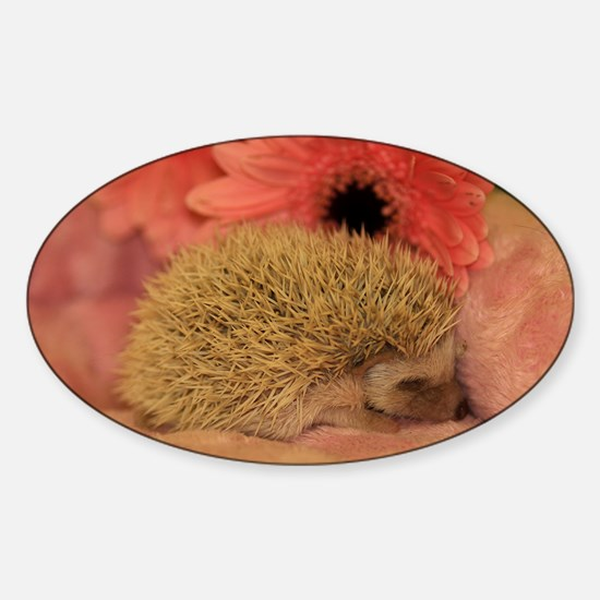 baby_hedgehog_1 Sticker (Oval)