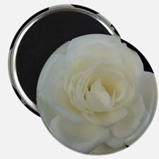 Midnight Rose Magnet