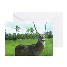 WATERBUCK Greeting Card