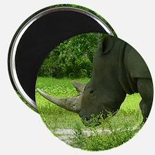 rhino low head Magnet