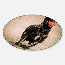 Auugie Labrador Retriever Sticker (Oval)