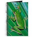 Green Tree Frog Journal