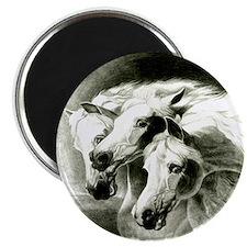 Pharaohs Horses 2014 Magnet