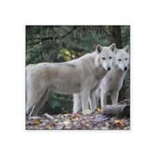 "White Wolves Square Sticker 3"" x 3"""