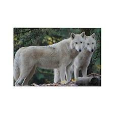 White Wolves Rectangle Magnet