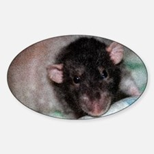 Dumbo Rex Domestic Rat Decal