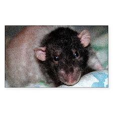 Dumbo Rex Domestic Rat Decal