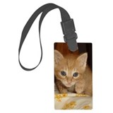 Ginger kitten Luggage Tags
