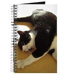 Cat Stretch Journal