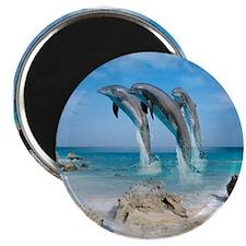 Dolphin Jump Tiles Magnet