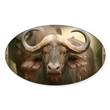 African Cape Buffalo Decal