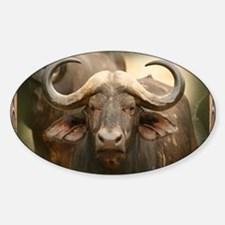African Cape Buffalo Sticker (Oval)