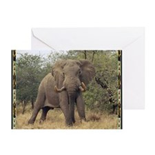 african elepahnt 1 Greeting Card