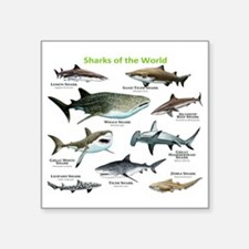 """Sharks of the World Square Sticker 3"""" x 3"""""""