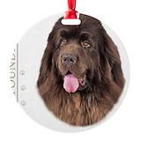Brown newfoundland dog Round Ornament