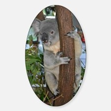 Koala Decal
