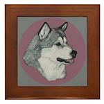 Gray Alaskan Malamute Framed Tile