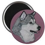 Gray Alaskan Malamute Magnet