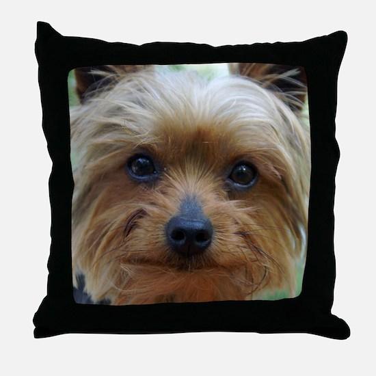 YorkieShowerC Throw Pillow
