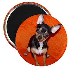 ChihuahuaShower2 Magnet