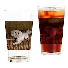 MalteseShower1 Drinking Glass