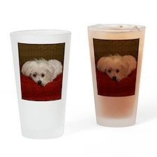 MalteseShower2 Drinking Glass