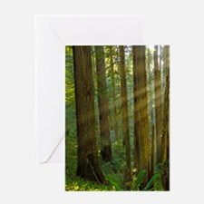 Humboldt Rays thru Redwoods Greeting Card