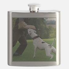 american bulldog b Flask