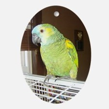 Amazon Parrot1100x1500 Oval Ornament