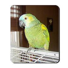 Amazon Parrot1100x1500 Mousepad