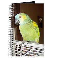 Amazon Parrot1100x1500 Journal