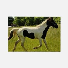Spotted Horse Rectangle Magnet