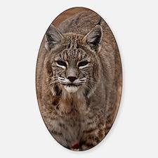 (11p) Lynx 5214 Decal
