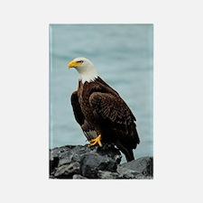 TabletCases_eagle_4 Rectangle Magnet