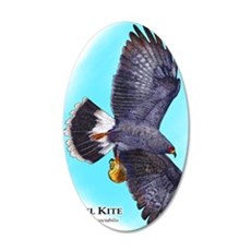 Snail Kite 35x21 Oval Wall Decal