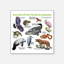 "Animals of the Florida Ever Square Sticker 3"" x 3"""