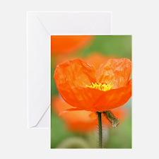 Orange Iceland Poppy Flower Greeting Card