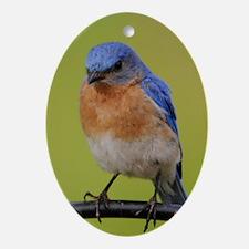 1100x1500eastern bluebird Oval Ornament