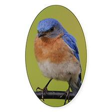 1100x1500eastern bluebird Decal